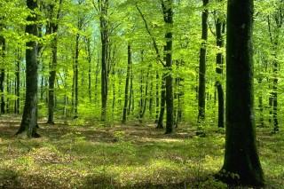 В восьми районах Якутии введен режим ЧС из-за риска возникновения лесных пожаров