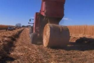 Американцы инвестируют деньги в производство биотоплива в Украине