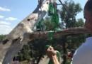 В Семее очистили елки от тары из-под свадебного шампанского