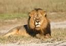 Расследование резонансного убийства известного льва Сесила подходит к завершению