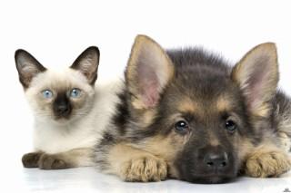 Кошки и собаки приносят людям больше всего пользы
