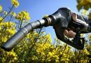 Биотопливо как альтернатива углеводородной энергии